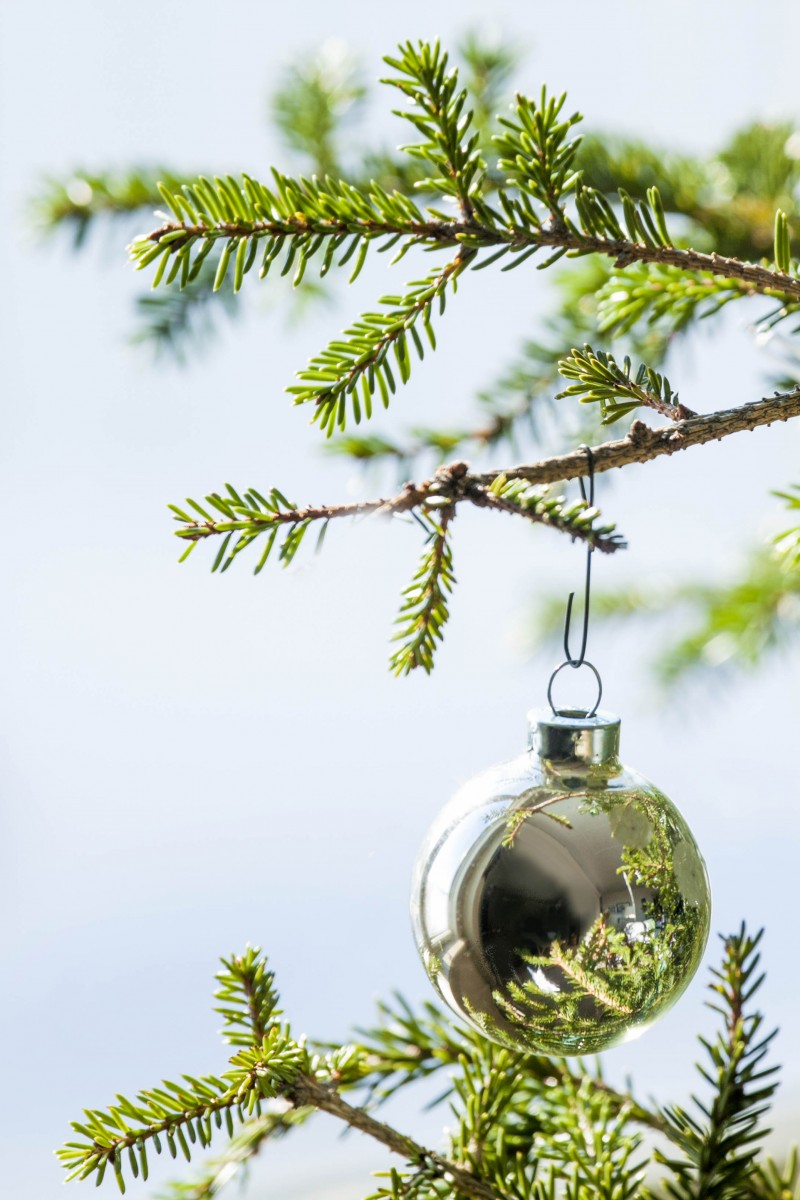 How to dispose your Christmas tree after the holidays ...