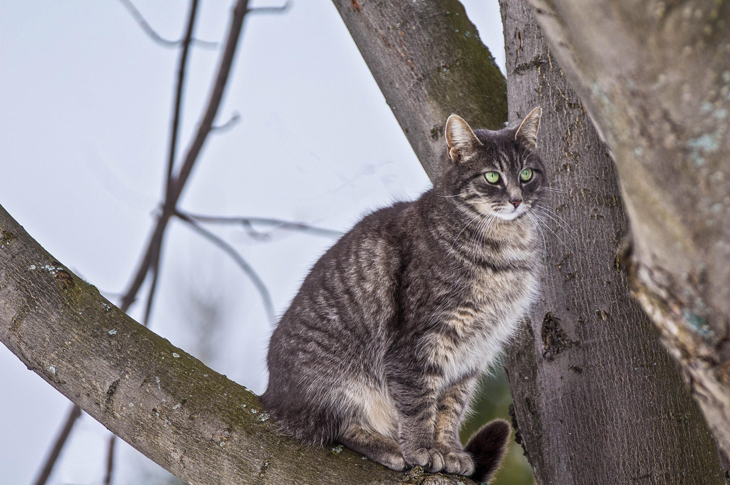stock image stray cat