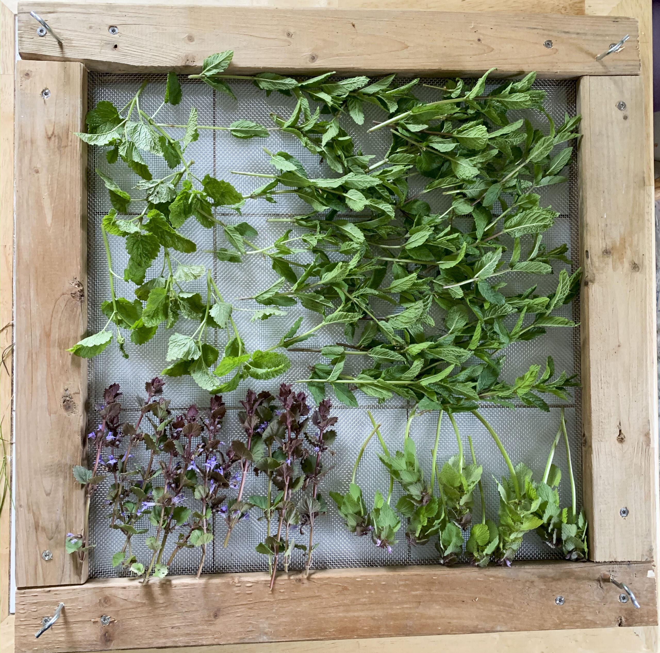 herbs drying on a homemade rack