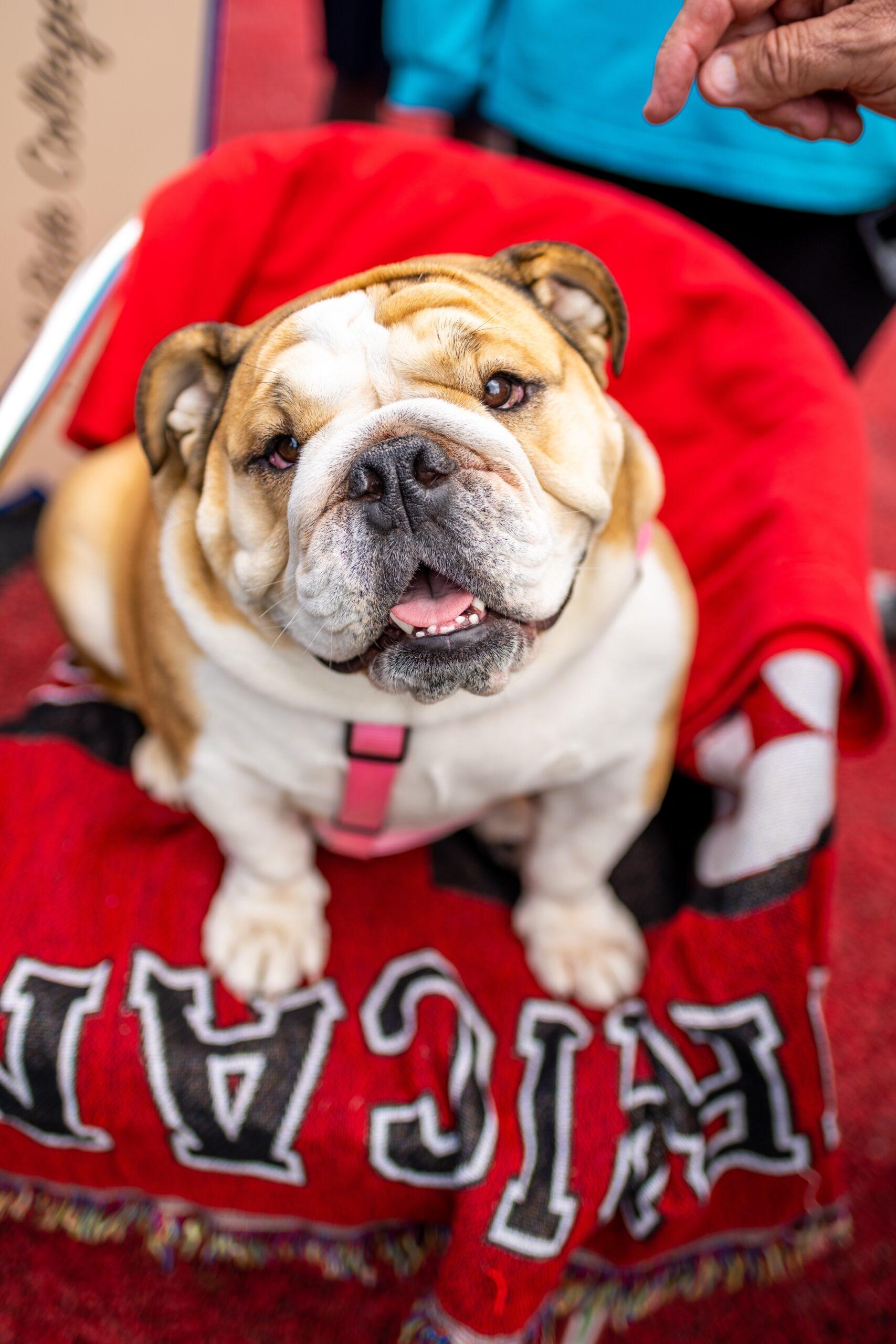 babydog on red blanket